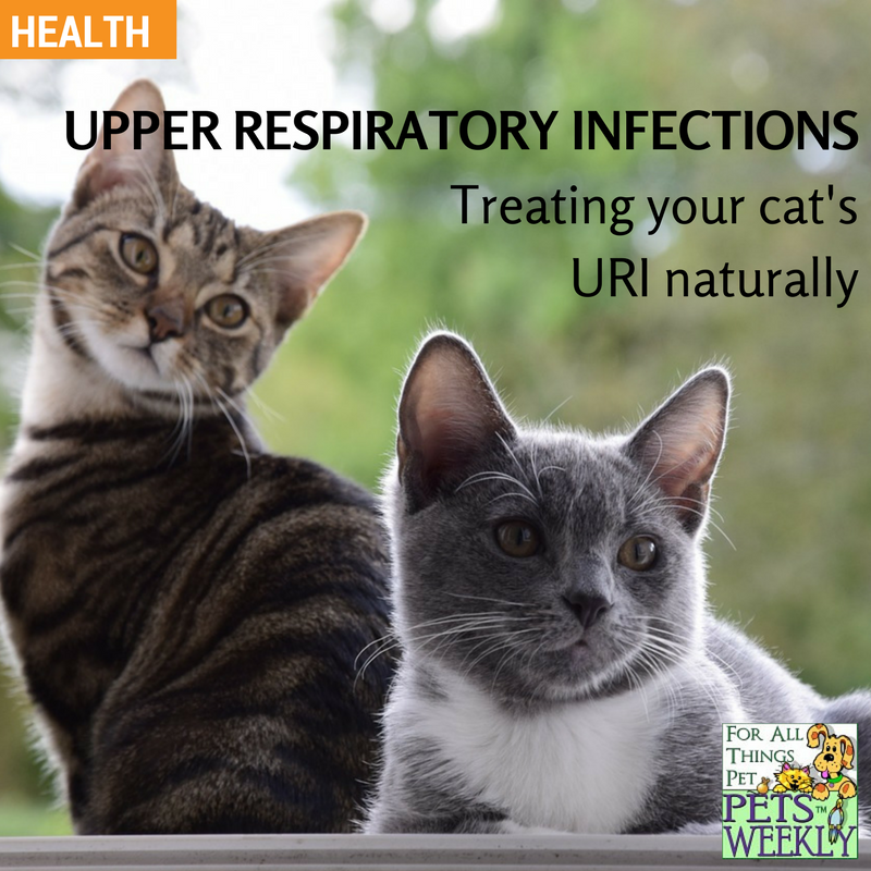 Natural Ways To Treat Your Cat S Upper Respiratory Infection Petsweekly