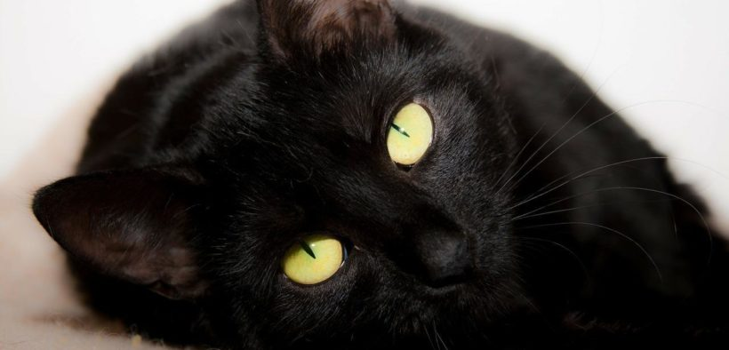 Natural Remedies for Cats, Difficulty breathing