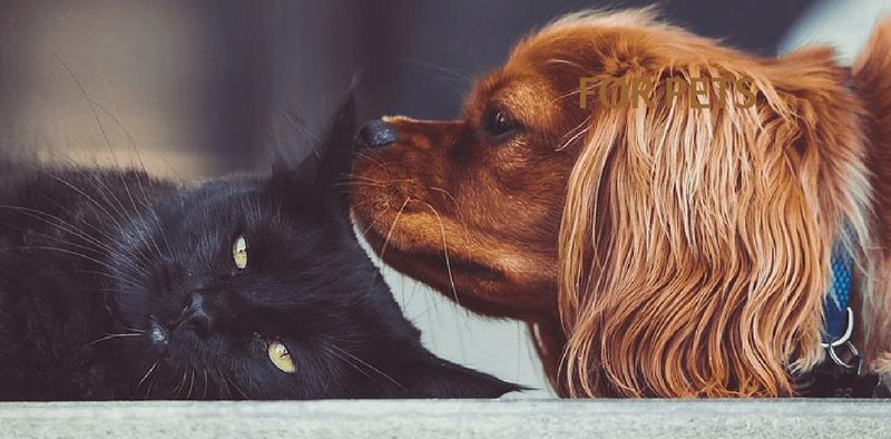 probiotics and prebiotics for pets