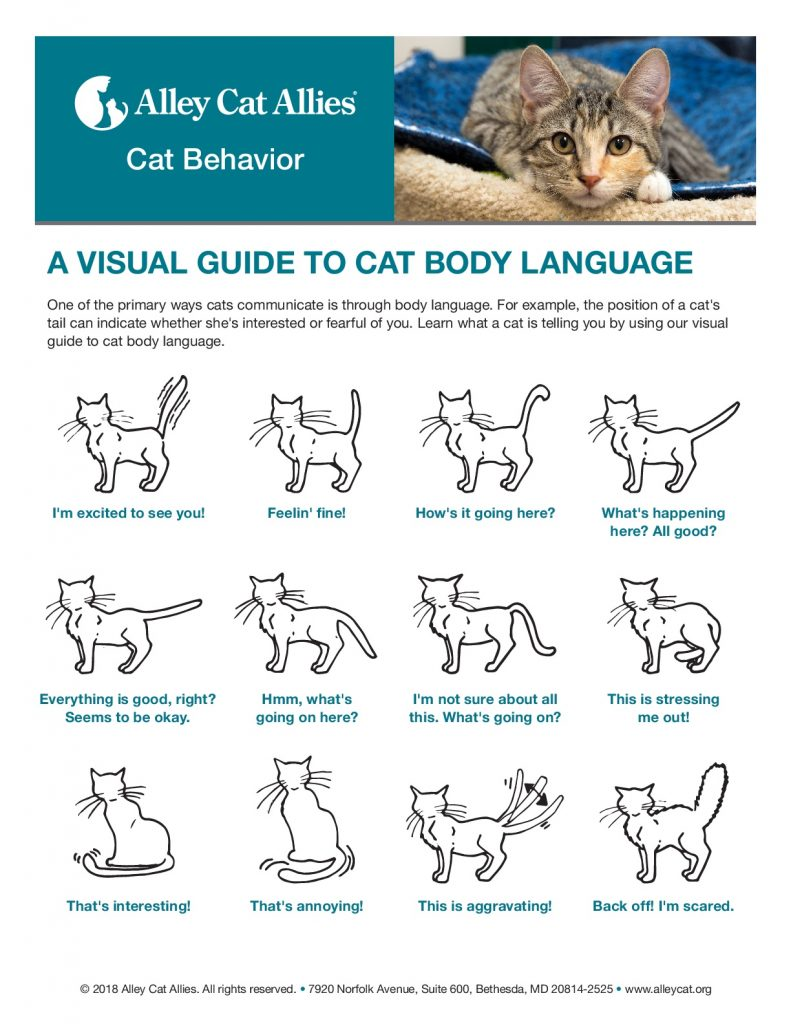Understanding cat body language