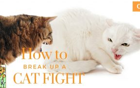 break up cat fight