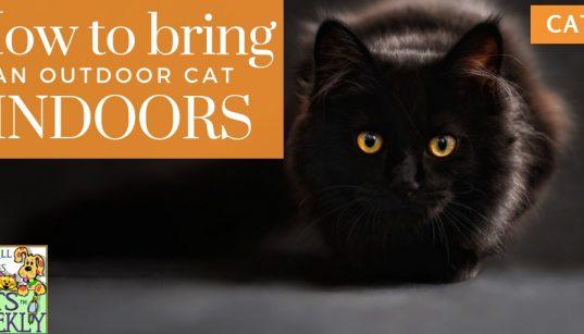 bring outdoor cat in