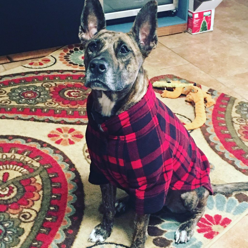 winter wear for dogs