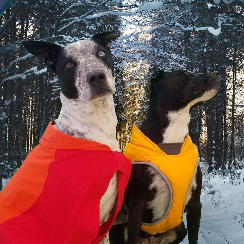 best winter coats for dogs