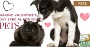 valentine-day-pets