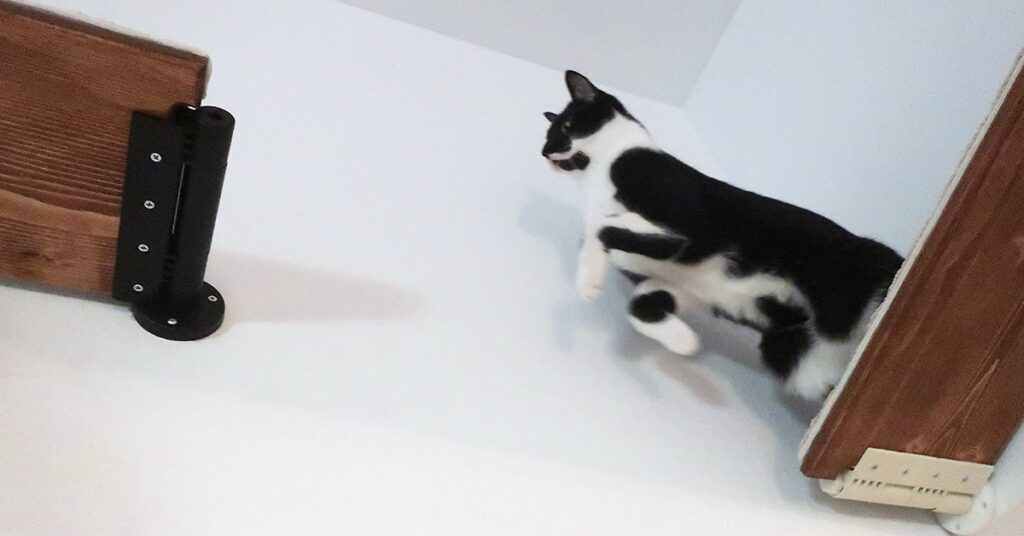catscapes jumping cat