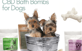 cbd bath bomb for dogs