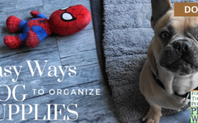 organize dog supplies