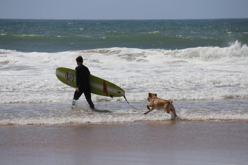 Pet-friendly Hotels in San Diego