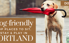dog-friendly portland