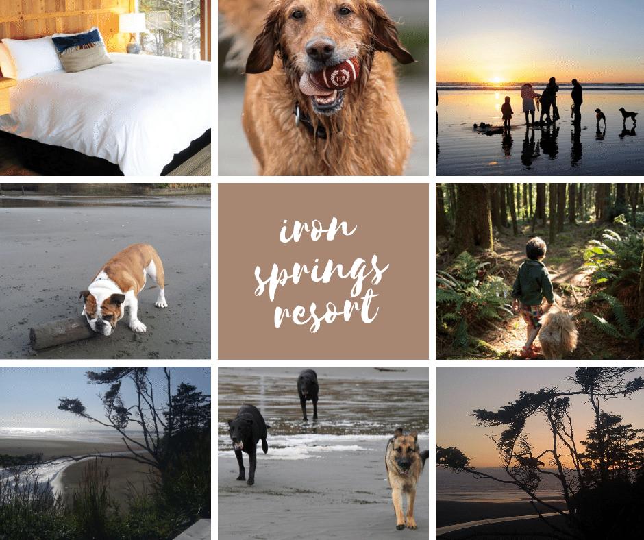 dog friendly pacific northwest iron springs resort, copalis beach wa