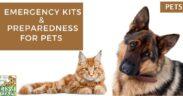 pet preparedness