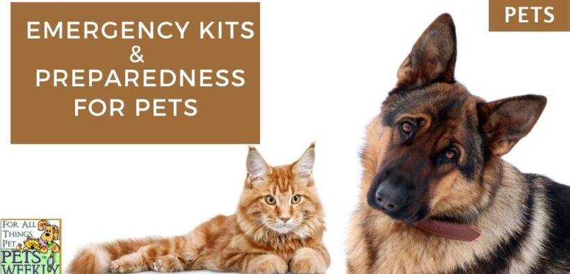 pet preparedness
