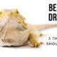 5 things to know about bearded dragons