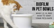 biofilm in pet's bowls